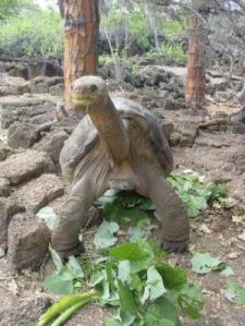 oldest_tortoise