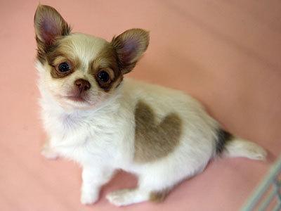 puppylovewg4